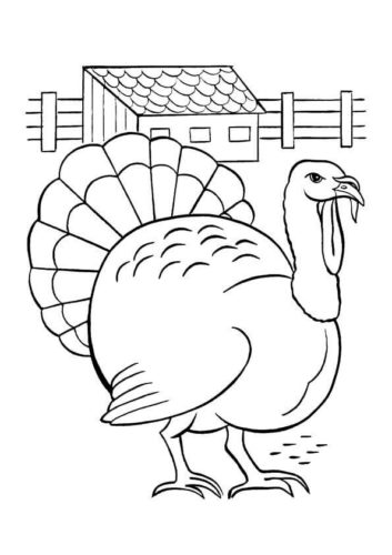 Slate Turkey Coloring Page