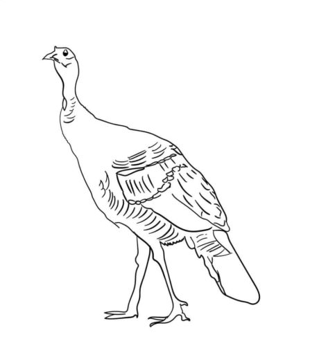 South Mexican Turkey Coloring Picture To Print