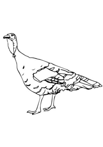 The Rio Grande Turkey Coloring Image