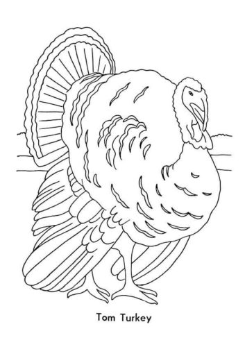 Tom Turkey Coloring Page