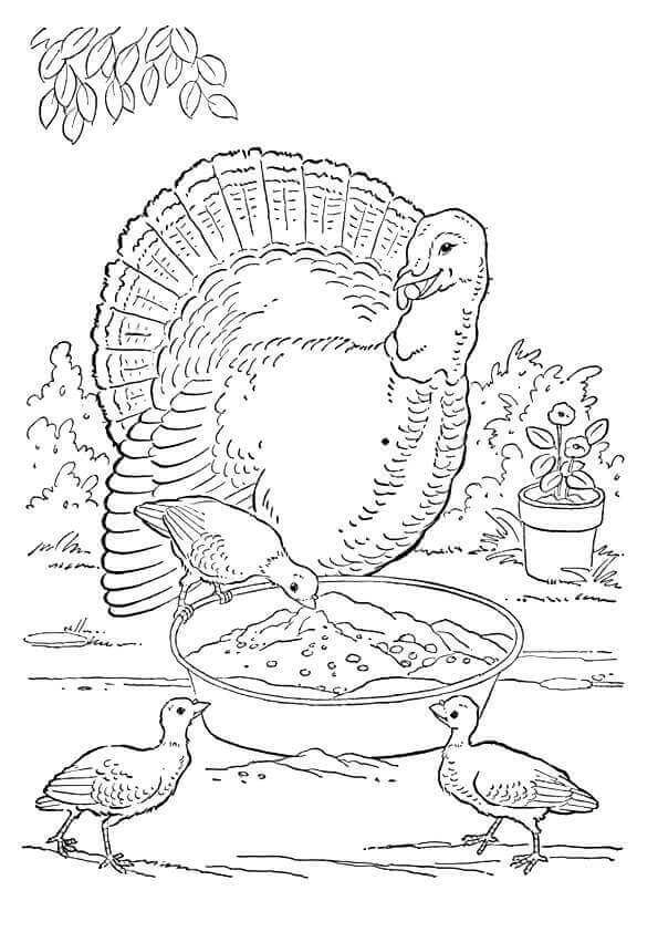 Turkey Grazing Coloring Page
