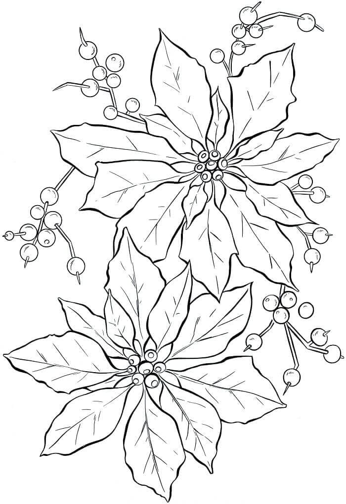 December Flower Poinsettia Coloring Page