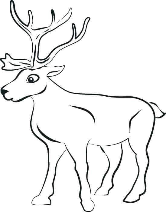 Reindeer Coloring Pages Printable