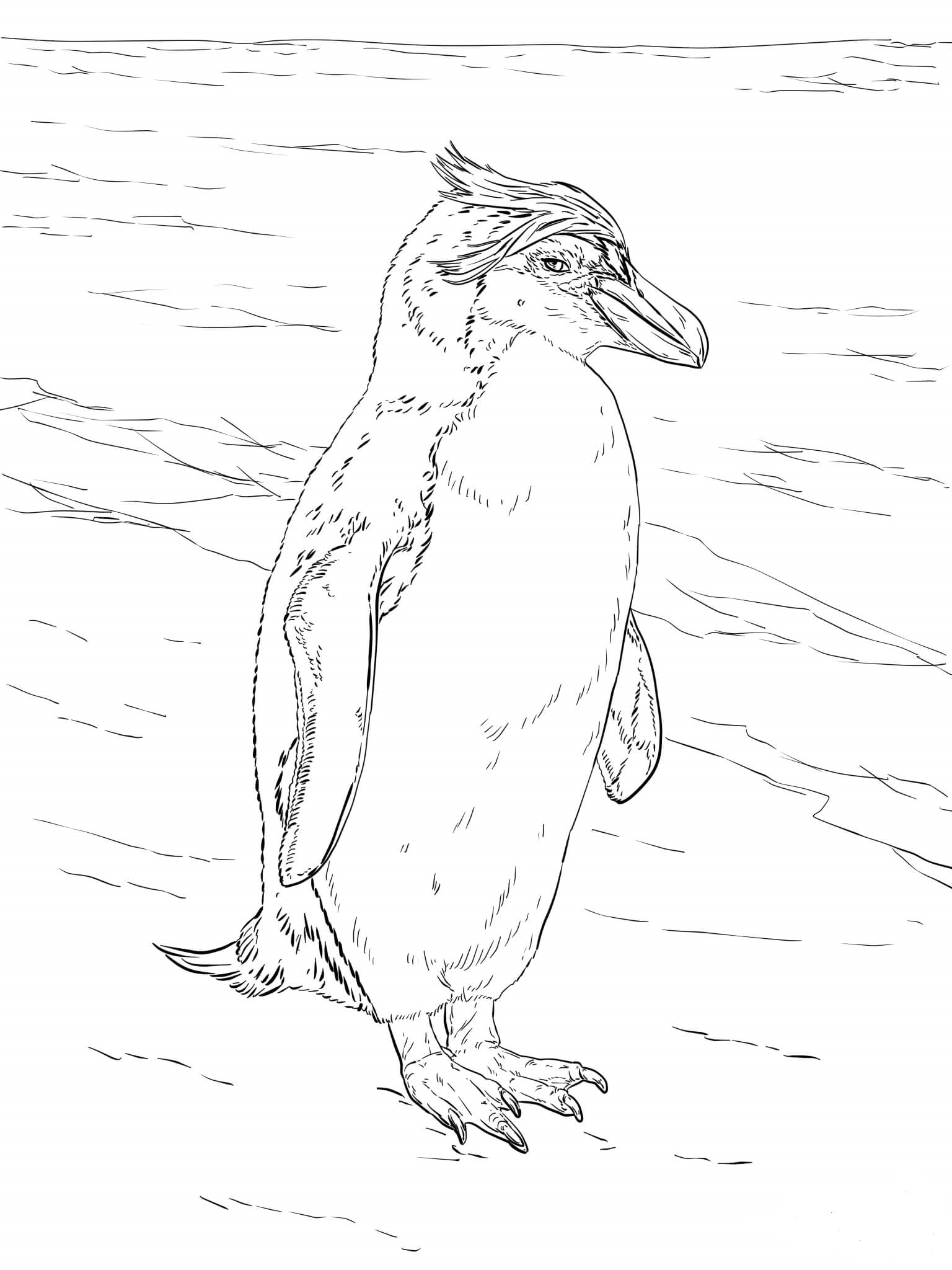 Royal Penguin Coloring Page