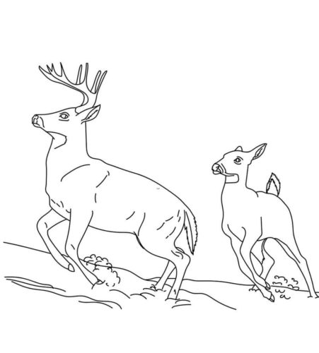 The Eurasian Woodland Reindeer Coloring Page