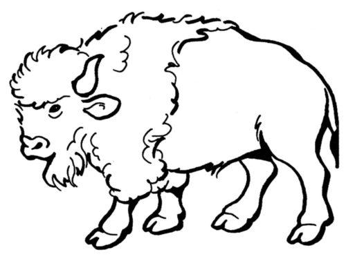 American Bison Kansas State Animal Coloring Page