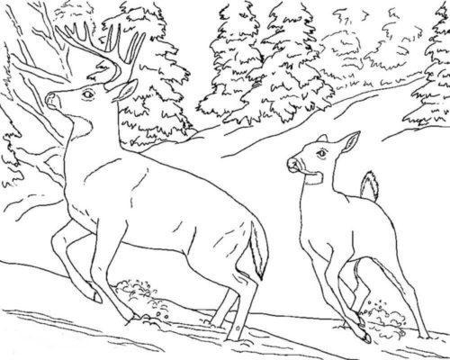 Snowy Landscape Coloring Page