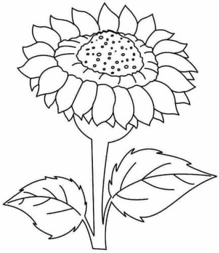 Wild Sunflower Kansas State Flower Coloring Image