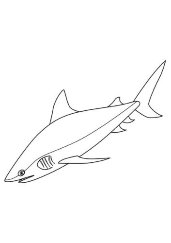 Bull Shark Coloring Page A4