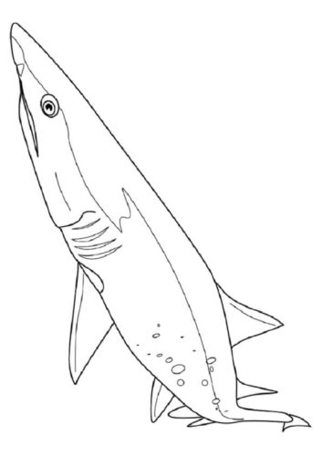 Cladoselache Shark Coloring Page