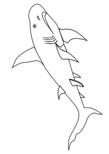 Dwarf Lantern Shark Colouring Page