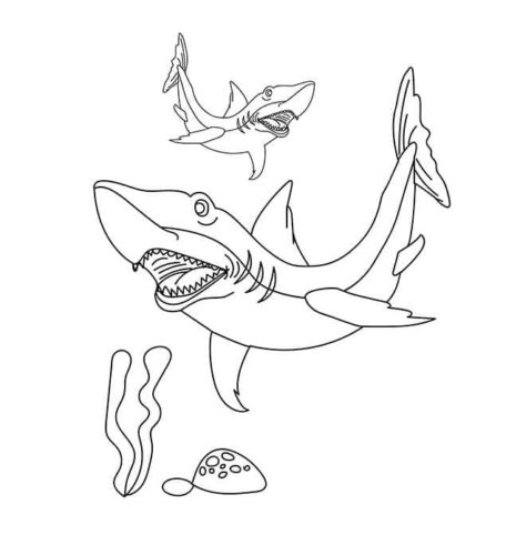 Gray Reef Shark Coloring Picture Free
