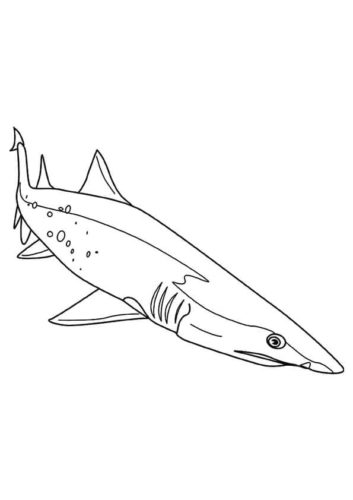 Great White Shark Coloring Page Printable