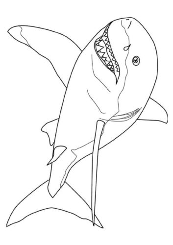 Mako Shark Coloring Page