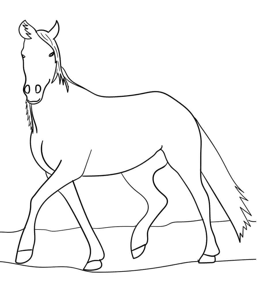 Arabian Horse Coloring Page