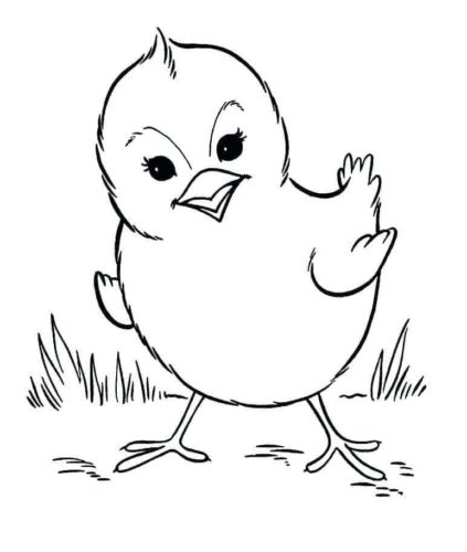 Chick coloring page