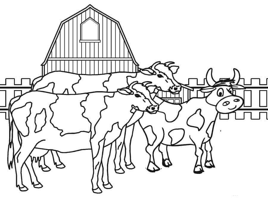 Farm Animal Cows coloring page