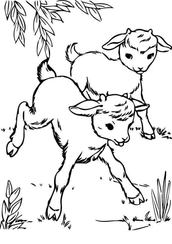 Goats At Farm coloring page