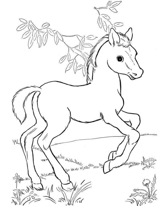Pony Coloring Pages Printable