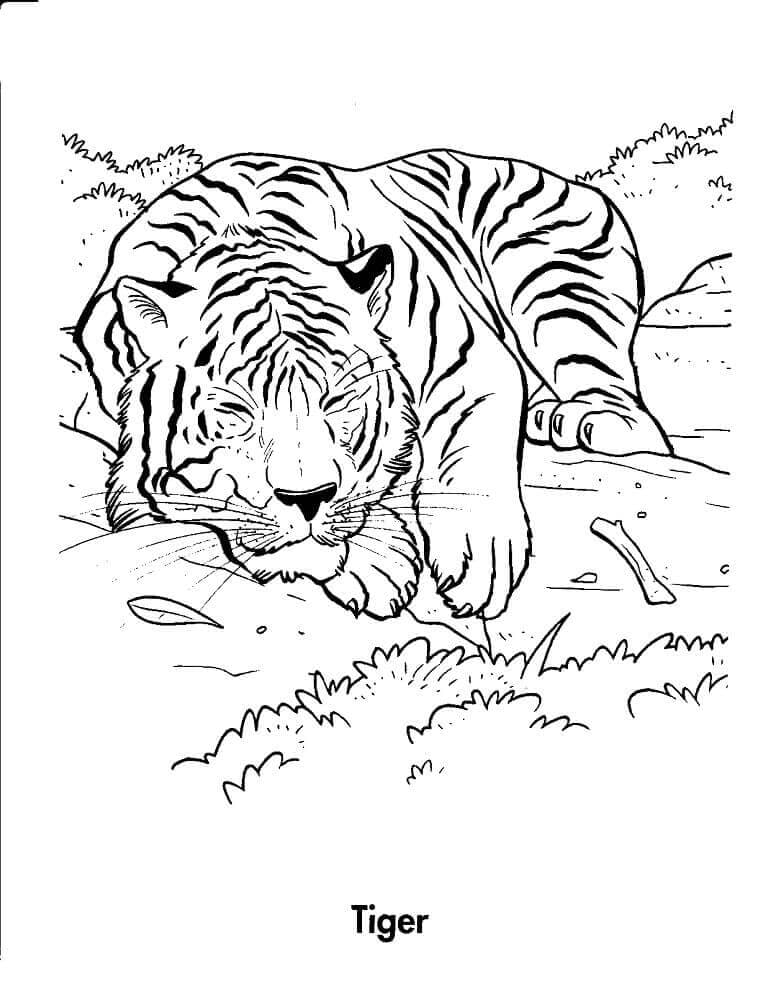 Tiger Resting in Forest coloring page
