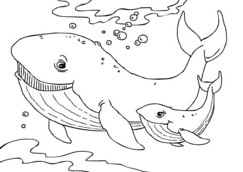 Whales Picture to color