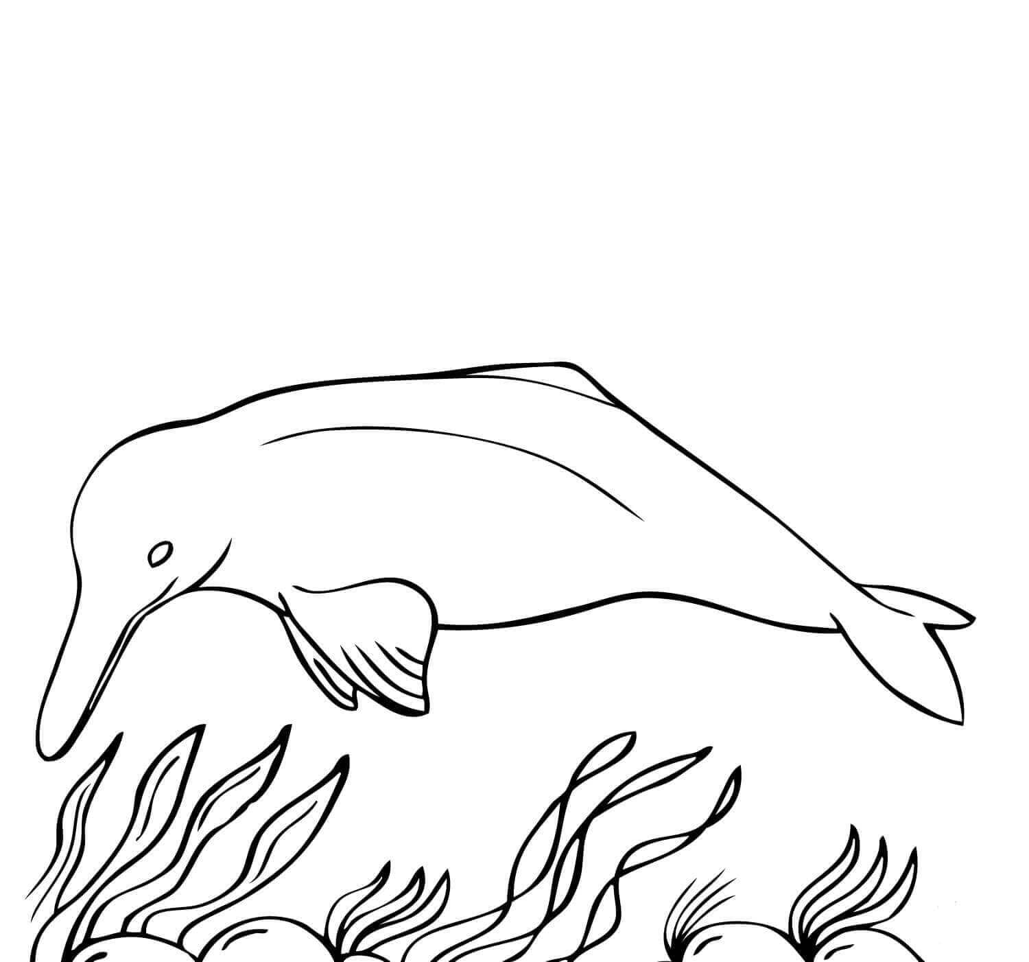 Amazon River Dolphin Coloring Page