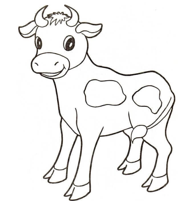 Baby Cow Coloring Sheet
