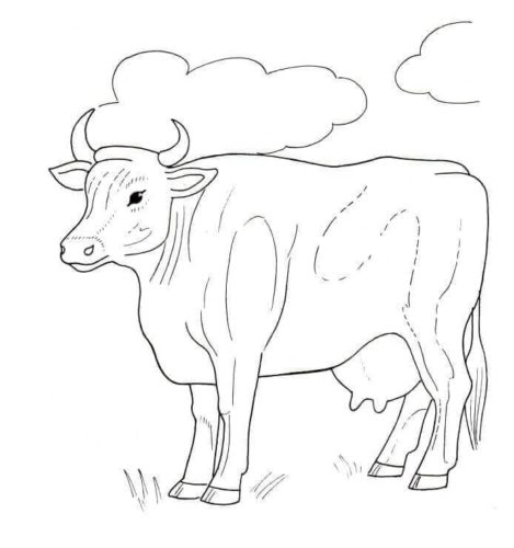 Free Printable Cow Coloring Sheets