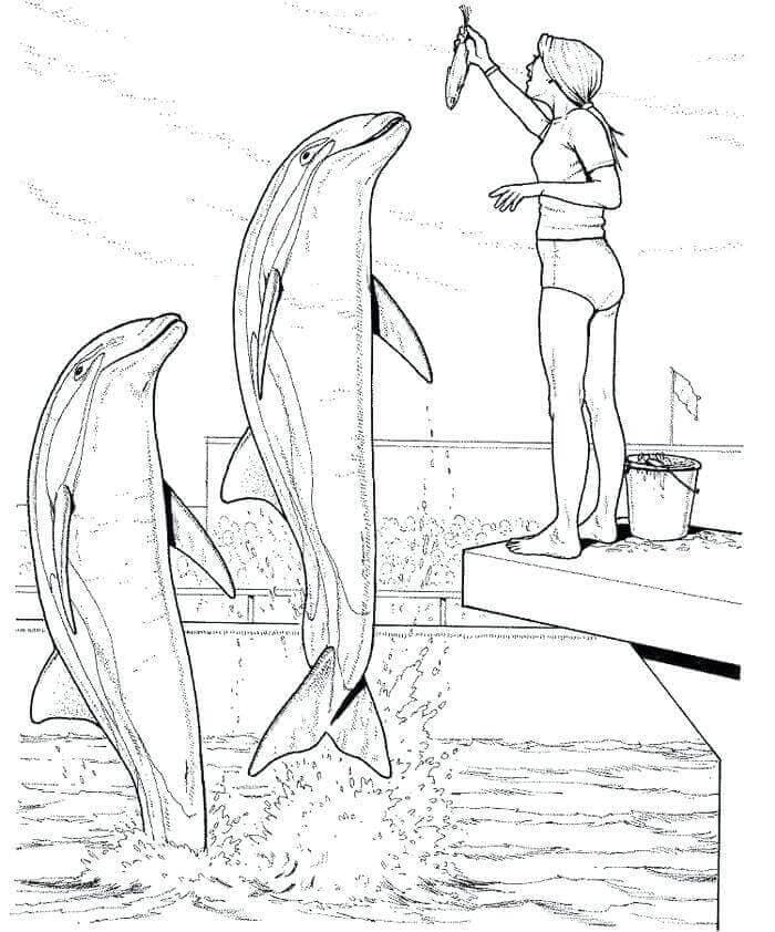 Girl Feeding The Dolphins