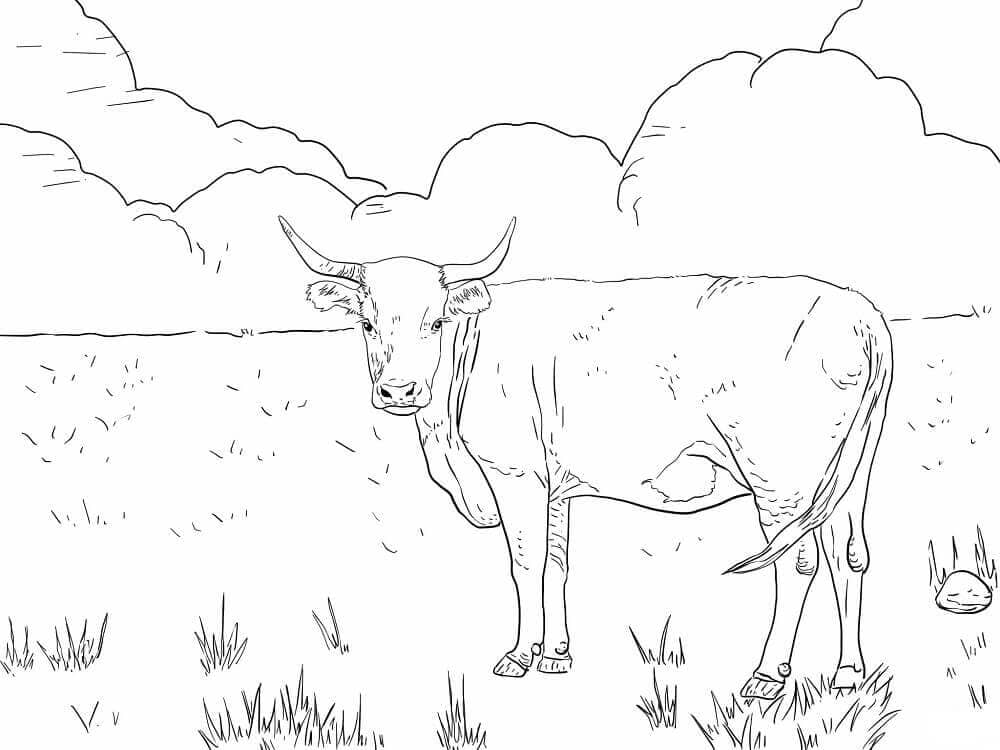 Horned Hereford Cow Coloring Page