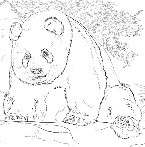 Giant Panda Coloring Page