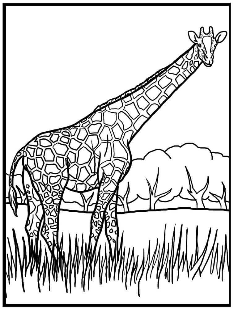 Giraffe Coloring Pictures To Print