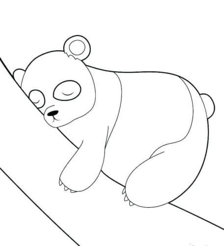 Panda Sleeping