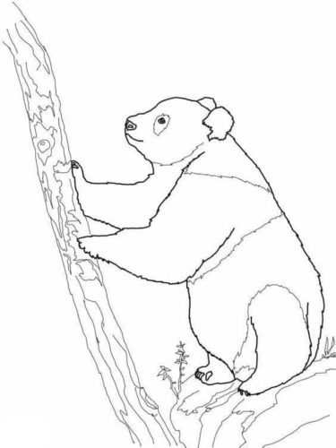 Panda Trying To Climb A Tree