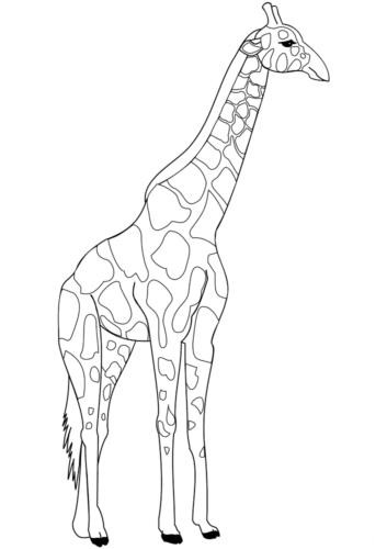 Realistic Giraffe Coloring Page