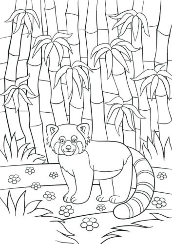 Red Panda Coloring Printable