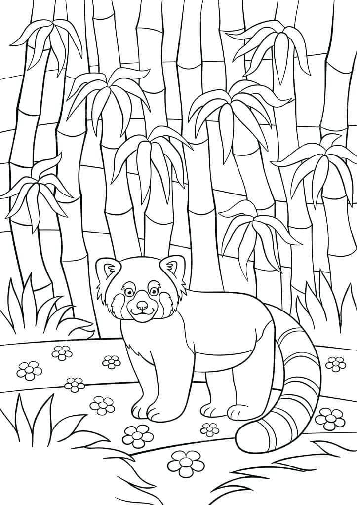 Red Panda Coloring Printable