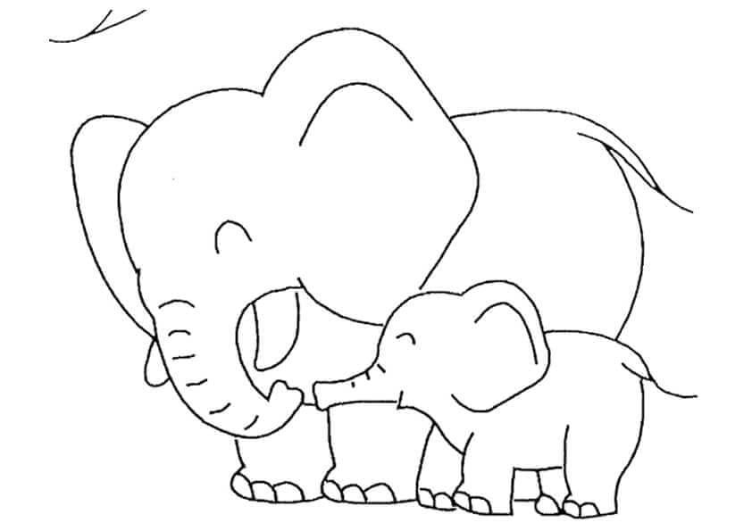 Baby Elephant With Mommy Elephant