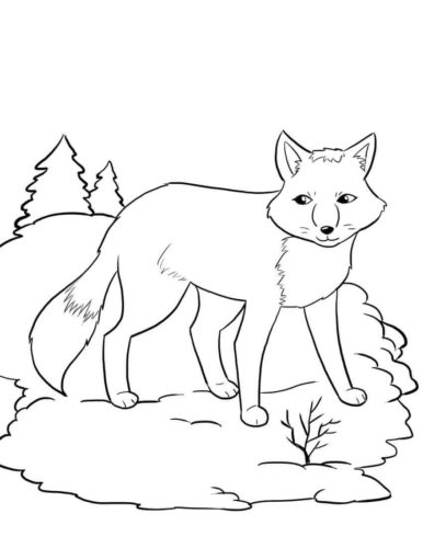 Fox In The Forest
