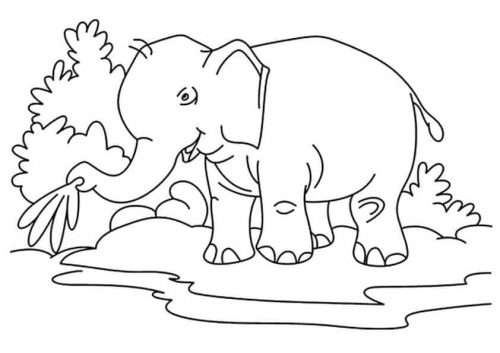 Thirsty Elephant Coloring Page