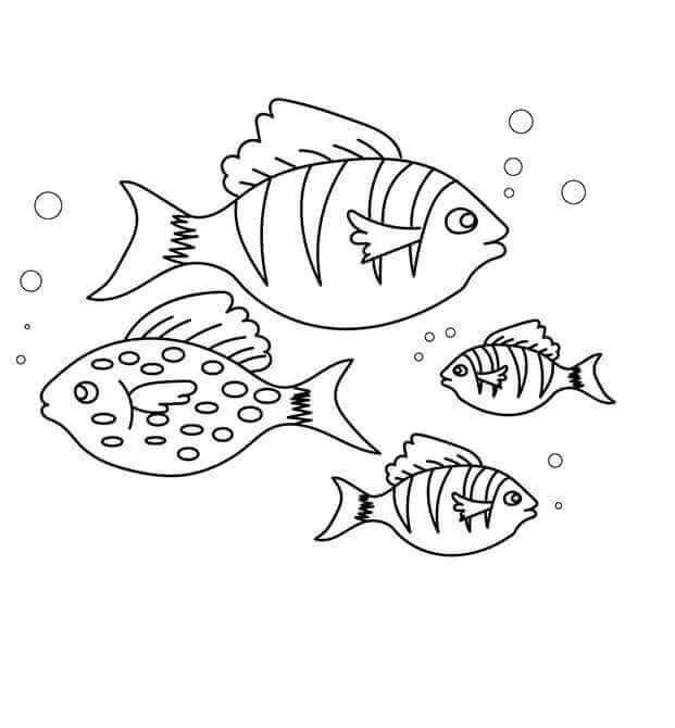 Free Printable Fish Coloring Pages ScribbleFun