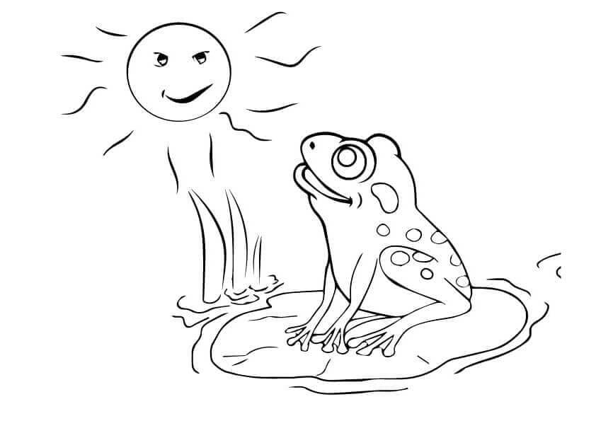 Frog Enjoying Summer