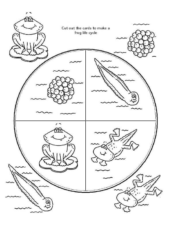 Frog Lifecycle Coloring Page