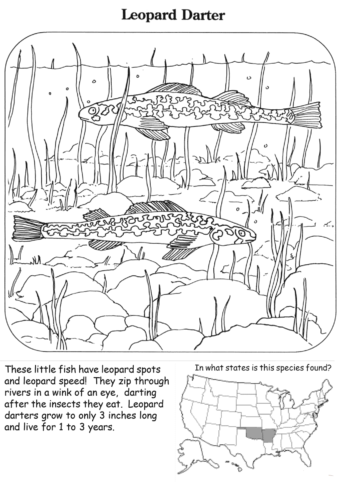 Leopard Darter Coloring Page