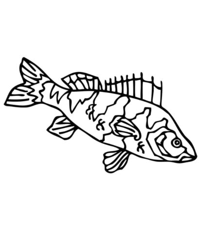 Perch Fish Coloring Sheet