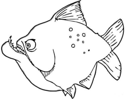 Piranha Coloring Page