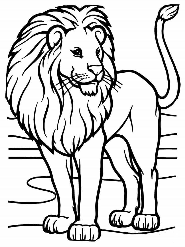 African Lion Coloring Pages