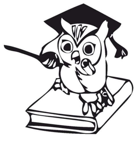 Agitated Owl