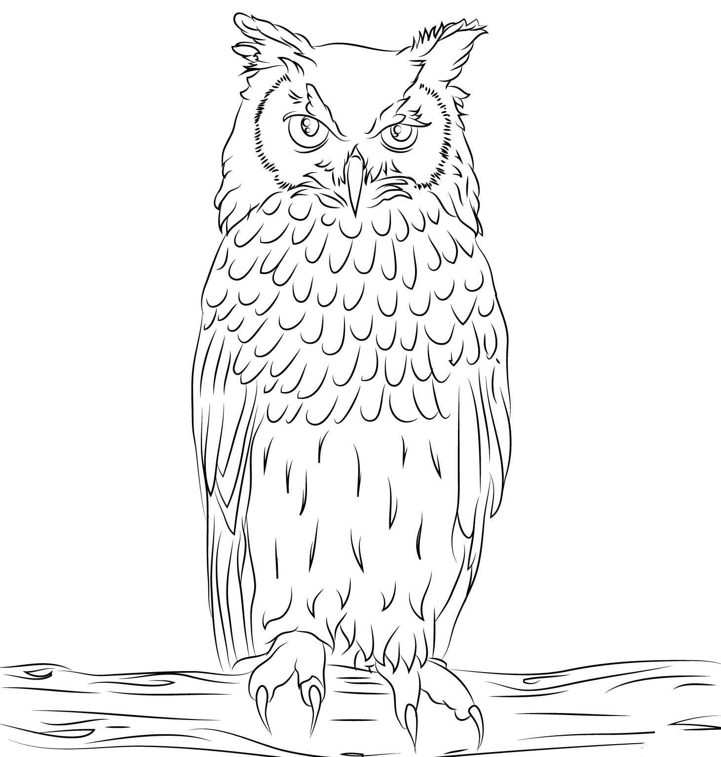 Bengalese Owl