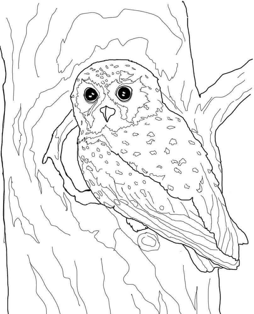 Elf Owl Coloring Page